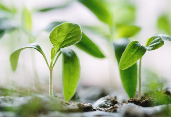 Picture of a few plant seedlings